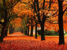 parques temáticos en otoño